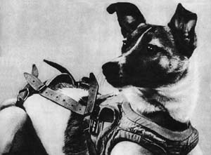 Laika, first animal launched into orbit
